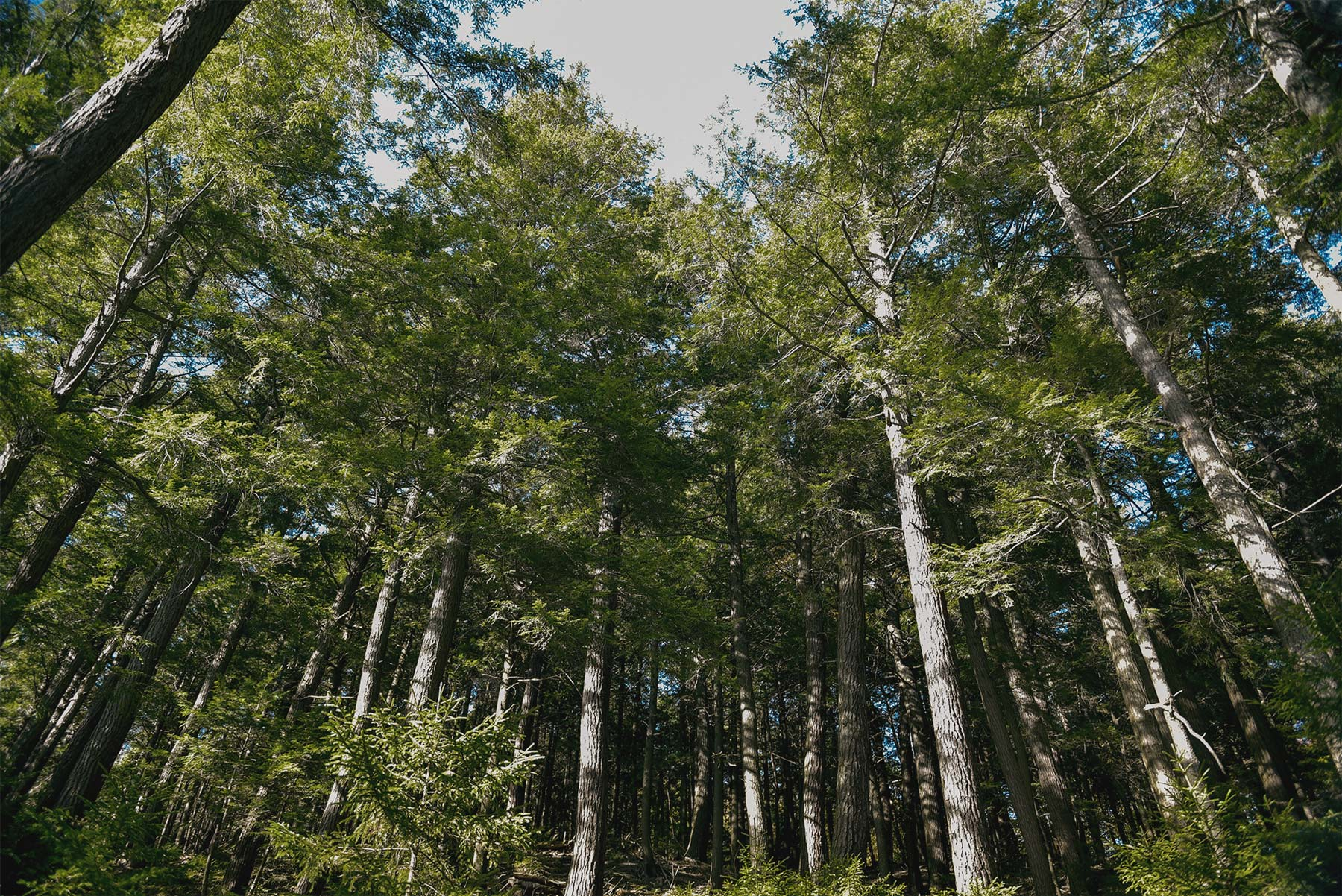 Forest-Trees-Upstate-NewYork