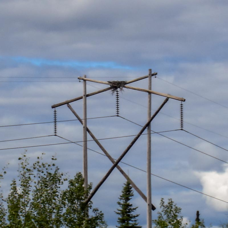 Eagle Nest on a wooden pylon