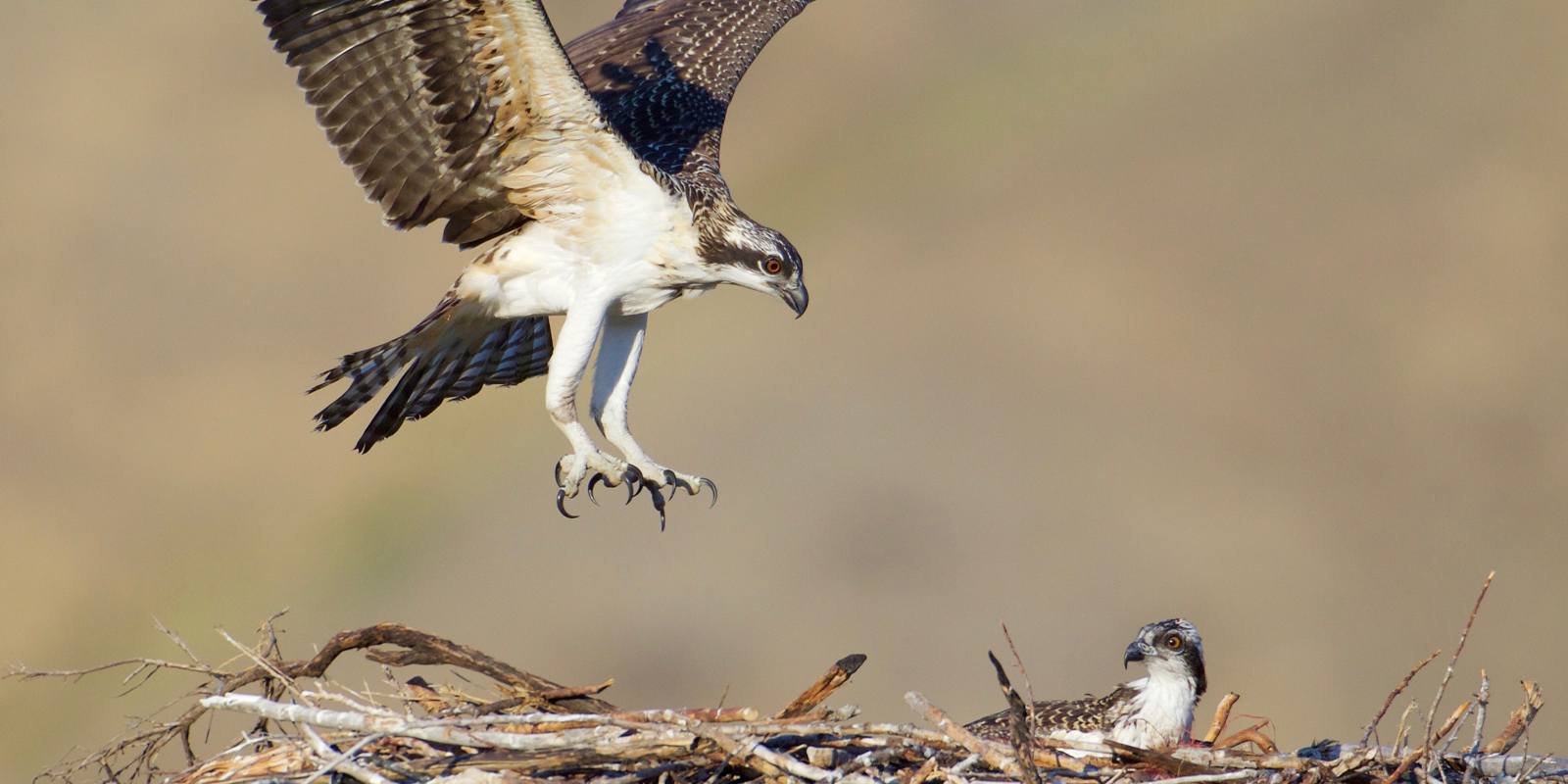 Unintentional Harm to Migratory Birds is Lawful under USFWS Proposed Rule